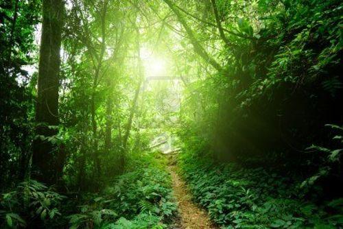 10766052-chemin-dans-la-jungle-de-malaisie