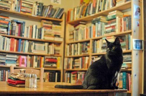 Chat_librairie-sitter